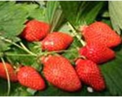 Agri Distribution - MALLEMORT - Autres produits agricoles