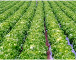 Agri Distribution - MALLEMORT - Le maraîchage plein champ