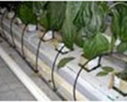 Agri Distribution - MALLEMORT - Le maraîchage sous tunnels et serres