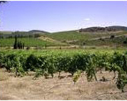 Agri Distribution - MALLEMORT - La vigne