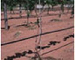 Agri Distribution - MALLEMORT - L'arboriculture